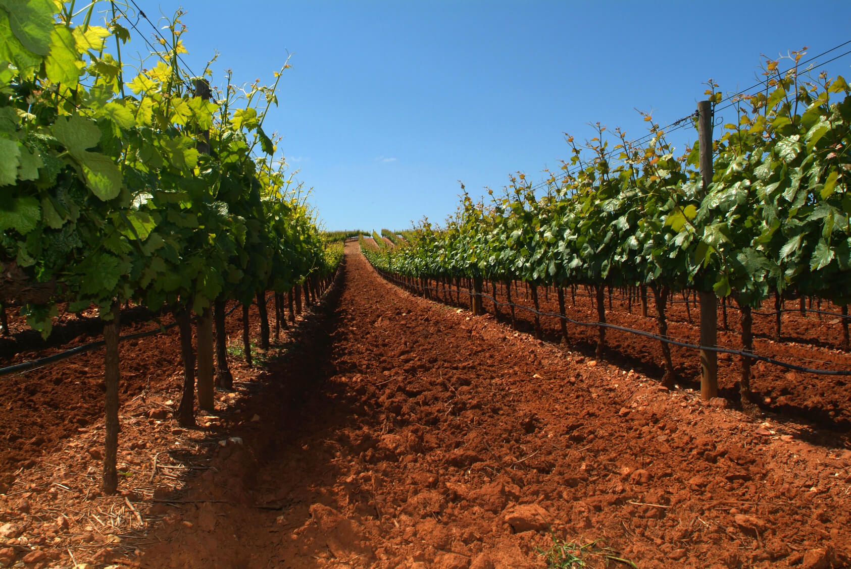 Porto Wine Vineyards